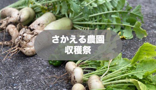 【島の日常】畑をやろう!さかえる農園の野菜を収穫したよ!